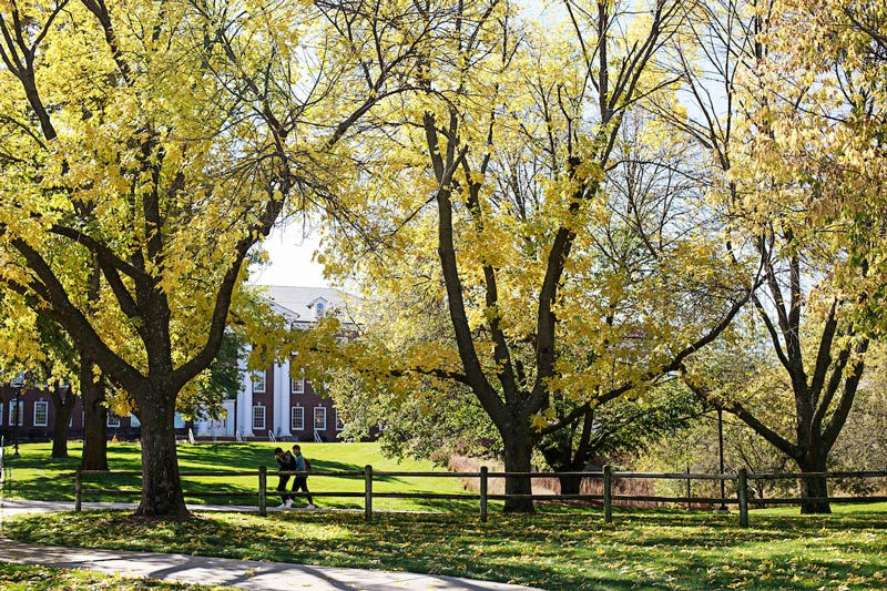 Photo of campus trees  in the early fall