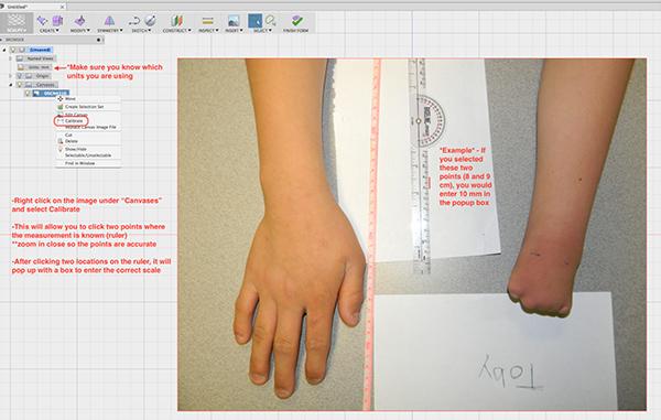 Fusion 360 Scaling Procedure | Biomechanics | University of