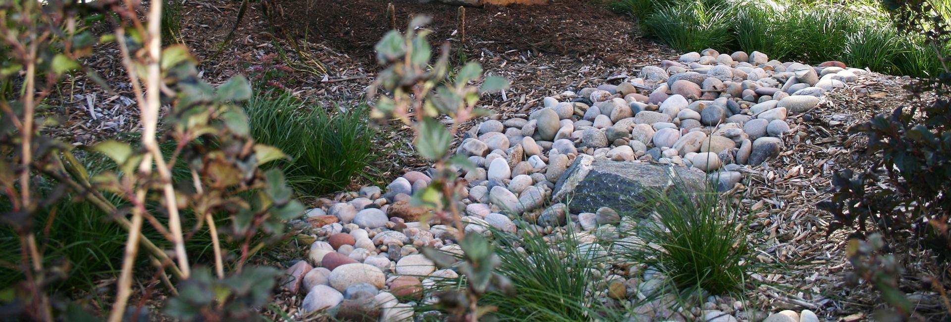 Students to Reveal Rain Garden Designs News University